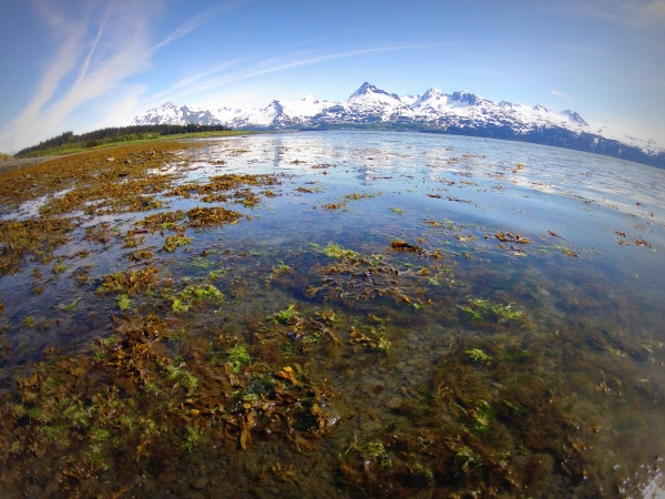 Alaska coastal intertidal zone