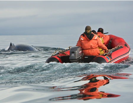 researchers traveling alongside a humpback whale