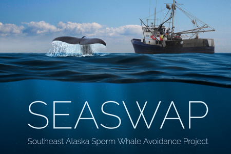 Seaswap website thumbnail