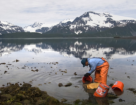 biologist collecting samples in the rocky intertidal shorezone