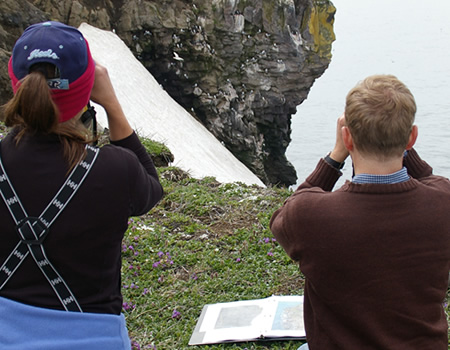 biologists observing a seabird colony along a cliff